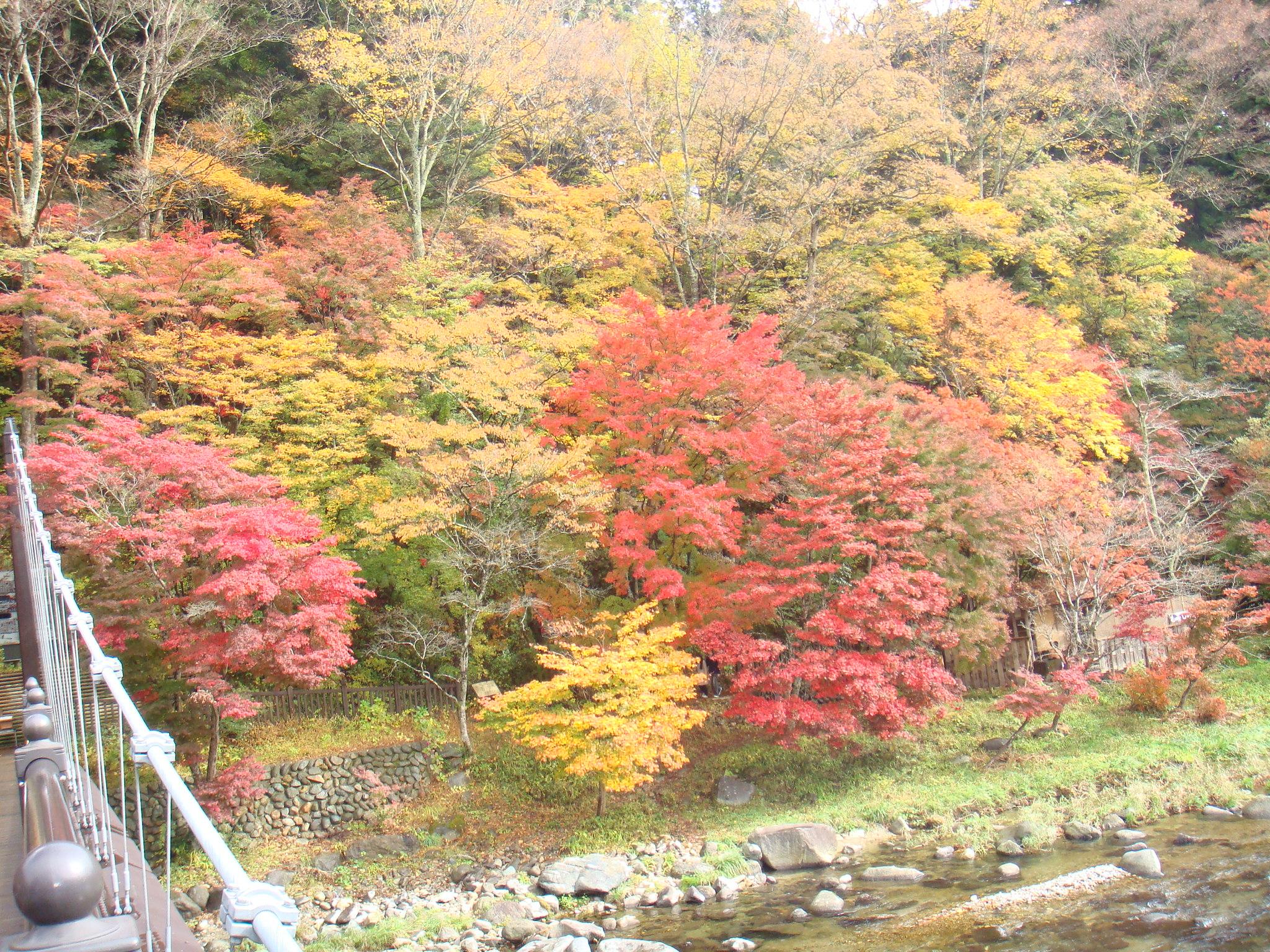 もの語り館前の紅葉(つり橋右側)