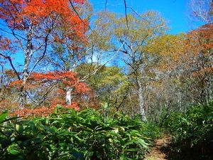 落葉樹の林