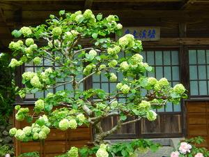 妙雲寺2014.5.14
