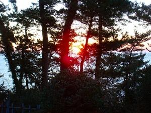 大観が好んだ松の間から日の出