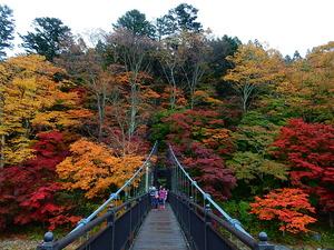 紅の吊橋11.1