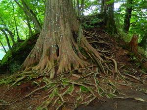 まるでアニメの世界のような木