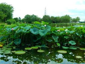 なかがわ水遊園の花