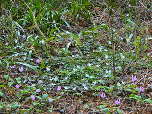 彩つむぎの早春の山野草たち
