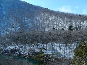 雪に木々の陰影