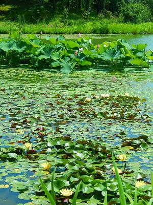 水生植物色々