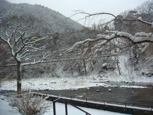 2/12朝の雪景色