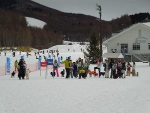 スラロームドッグスキー大会