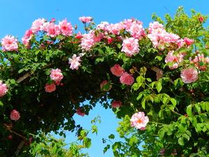あしかがフラワーパーク藤以外の花