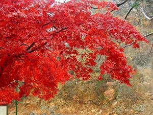 温泉街の最後の紅葉