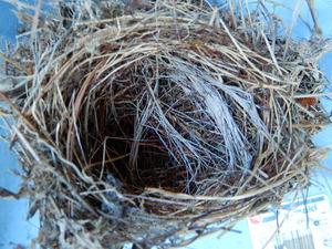 キセキレイの巣