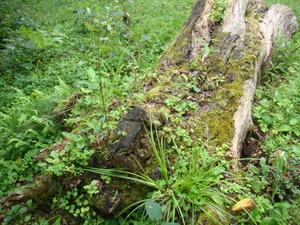朽木のオブジェ