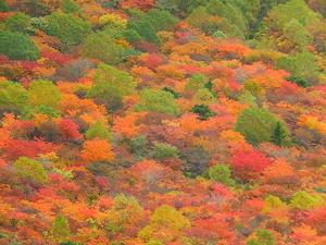 姥ヶ平の紅葉
