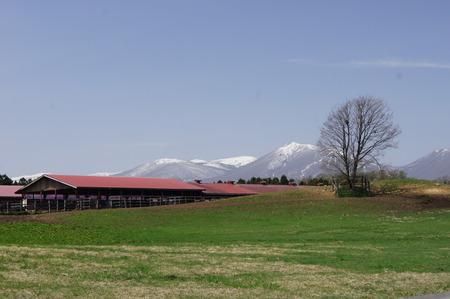 小岩井農場 遠景