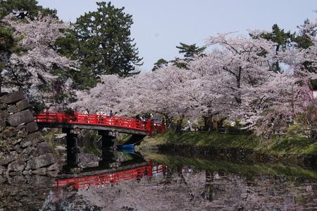 これは鷹丘橋。園内には八つの橋が架けられているんだって!ちなみに、私はそのうちの四つの橋を渡りました。