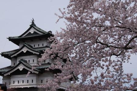 天守と桜のすばらしいコラボ!