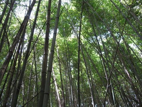 竹林からの空