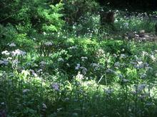 庭の白い花群生