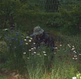 母と矢車草