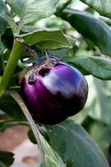 シチリア茄子