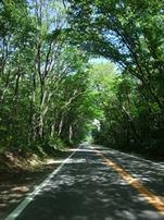 nasu-road
