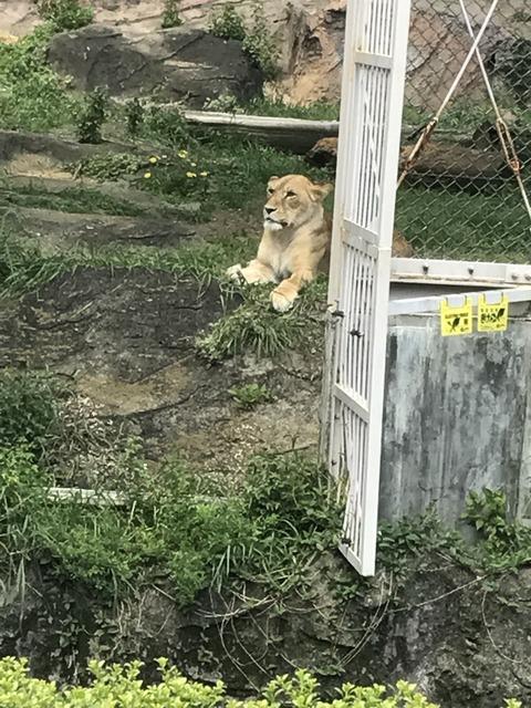 5月4日動物園IMG_6132