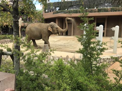 5月4日動物園IMG_6136