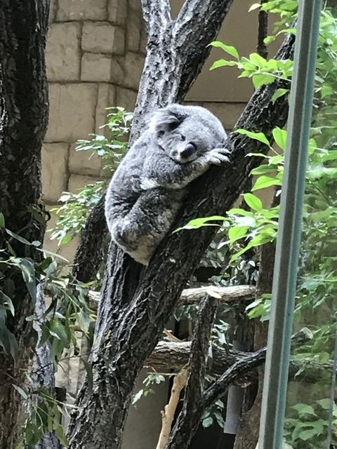 5月4日動物園IMG_6102
