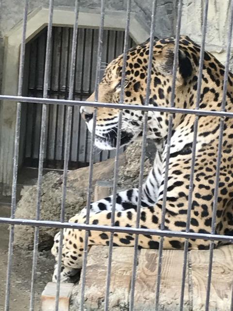 5月4日動物園IMG_6117