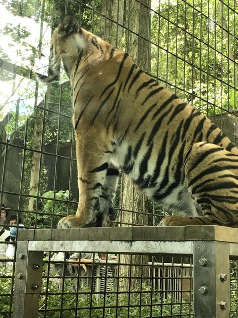 5月4日動物園IMG_6129