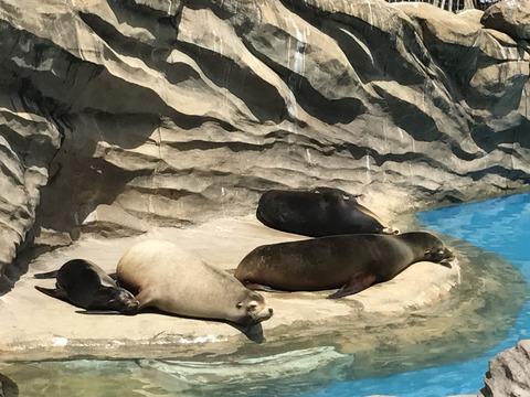 5月4日動物園IMG_6111