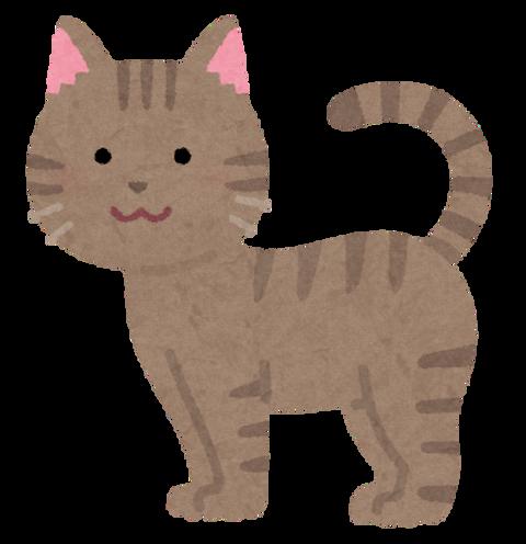 cat07_moyou_kijitora