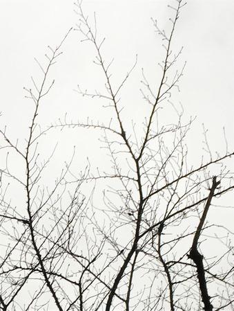 目黒川の桜200214