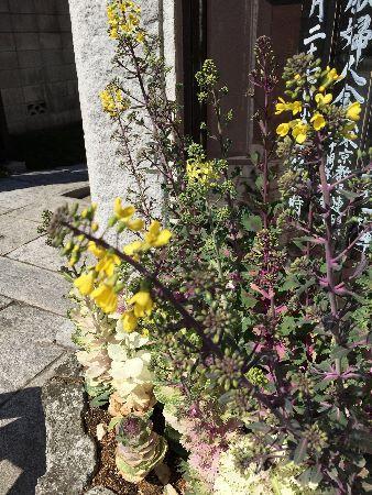 180317葉牡丹の花 (338x450)