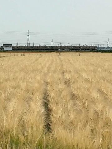 180526詩音さん麦畑