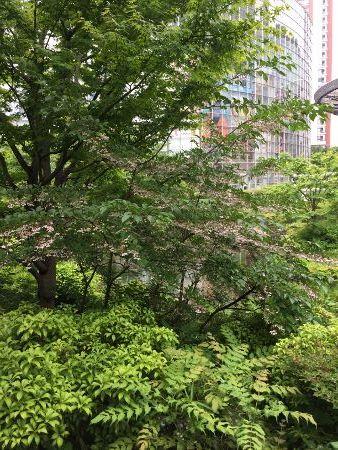 1705新樹雨