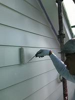 6-12外壁上塗りラジカルコートパーフェクトトップ塗布2回目5