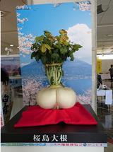 第11回国内観光活性化フォーラムinかごしま⑥(桜島大根)