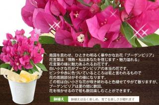 f:id:watasinokurasi:20160504094202j:plain