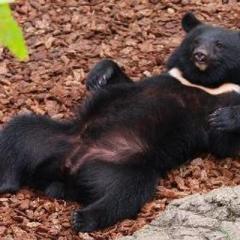 69歳女性 クマに襲われ顔や腕に大けが 兵庫 佐用町