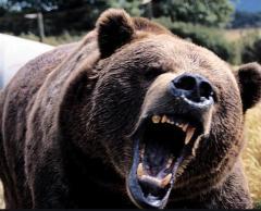 林道に男性遺体 クマに襲われたか 八幡平 岩手
