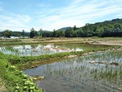 P20180712東旭川農園被害状況