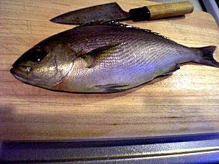 鶏魚(いさき)