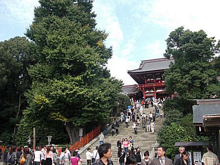 鶴岡八幡宮と大銀杏