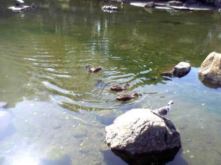 水ぬるむ戸越公園