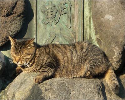 源氏山公園のドラ猫大将