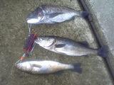 神戸釣果昨年