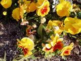 小学校の花8