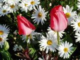 小学校の花5