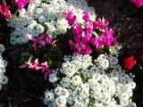 小学校の花1